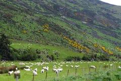 Viste della montagna e pecore di pascolo Fotografia Stock
