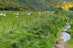 Viste della montagna e pecore di pascolo Fotografie Stock