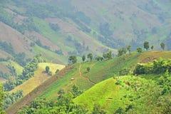 Viste della montagna nel parco nazionale di Doi Phu Kha Fotografie Stock