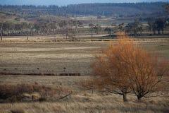 Viste della Tasmania rurale Immagine Stock Libera da Diritti
