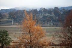 Viste della Tasmania rurale Immagine Stock