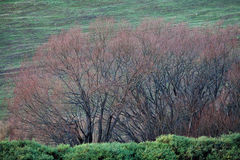 Viste della Tasmania rurale Fotografia Stock Libera da Diritti
