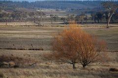 Viste della Tasmania rurale Fotografia Stock