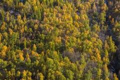 Viste delle montagne di Altai in autunno, Repubblica di Altai Immagine Stock Libera da Diritti