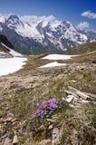 Viste di alta strada alpina del grossglockner in Austria Europa Immagine Stock Libera da Diritti