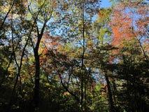 Viste di autunno Immagini Stock Libere da Diritti