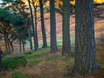 Viste di autunno al bacino idrico di Dovestone fotografie stock libere da diritti