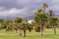 Viste di un parco con la palma ed il cielo con le nuvole di tempesta Fotografia Stock