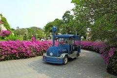 Viste pittoresche con le piante tropicali Immagini Stock Libere da Diritti