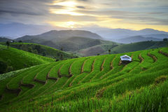 Visual arts rice terraces Stock Images