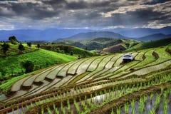 Visual arts rice terraces Royalty Free Stock Photo