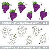 Visual game. Find hidden couple of Grapes Stock Images