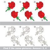 Visual game. Find hidden couple of Roses Royalty Free Stock Photo