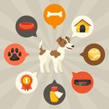 Visual infographics with cute dogs, icons and Stock Images