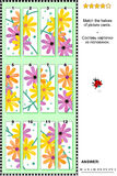 Visual puzzle - match the halves - gerber daisies Royalty Free Stock Images