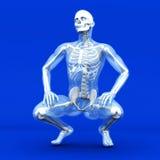Visualisation d'anatomie illustration de vecteur