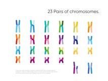 Visualisation Genomic de donn?es photographie stock