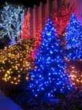 Visualización al aire libre del árbol de navidad imágenes de archivo libres de regalías
