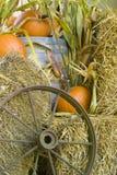 Visualización de la cosecha de la caída Foto de archivo