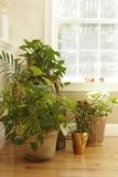 Visualización de la planta Foto de archivo libre de regalías