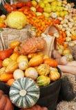 Visualización de las calabazas y de las calabazas de otoño Imagen de archivo libre de regalías