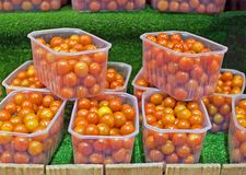 Visualización de los tomates del coctel Foto de archivo libre de regalías