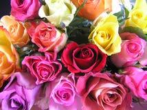 Visualización de rosas multicoloras Fotos de archivo