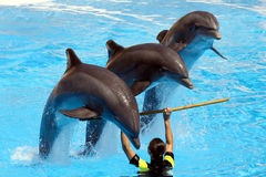 Visualización del delfín fotografía de archivo