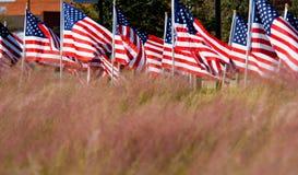 Visualización del indicador americano en honor del día de veteranos imagenes de archivo