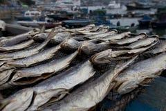 Visualización salada secada de los pescados foto de archivo libre de regalías