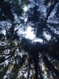 Visualizzazione ad albero Fotografia Stock