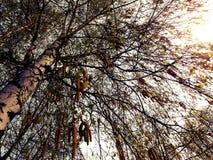 Visualizzazione ad albero Immagini Stock
