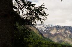 Visualizzazione ad albero della montagna dal lago Bohinj immagini stock