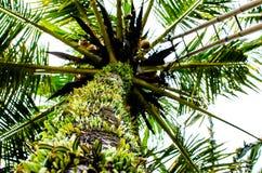 Visualizzazione ad albero della palma fotografia stock