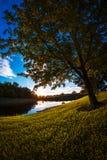 Visualizzazione ad albero vicino ad un lago Immagini Stock Libere da Diritti