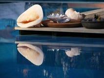 Visualizzazione del Seashell Fotografia Stock