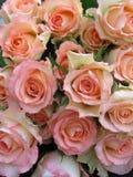 Visualizzazione delle rose multicolori Fotografia Stock Libera da Diritti