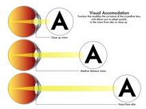 Visuele aanpassingsgrafiek stock foto