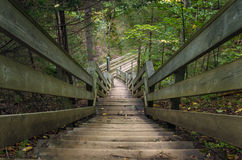 Vitória fácil embora uma floresta Fotografia de Stock Royalty Free