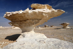 Vitöken, Egypten Arkivfoton