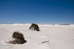 Vit öken - Lancelin - Australien Arkivbild