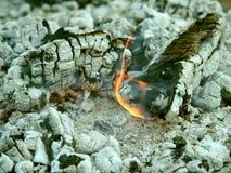 Vit aska av lägerbrand Royaltyfria Foton