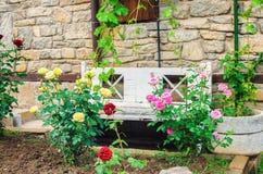Vit bänk med närliggande rosor Arkivbild
