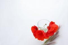 Vit bakgrund med det tomma stället för inskrift med röd poppi Royaltyfri Fotografi