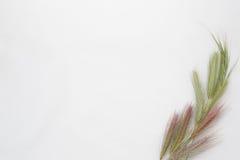 Vit bakgrund med det tomma stället för inskrift på en sh vit Royaltyfri Bild