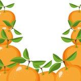 Vit bakgrund med gränsen av apelsinfrukter vektor illustrationer