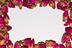 Vit bakgrund med ramen av steg blomningar Arkivfoton