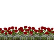 Vit bakgrund med rosegarden Fotografering för Bildbyråer