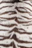 Vit bengal tigerpäls Arkivbild