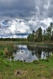 Vit bergnaturmitt, Pinetop Lakeside, Arizona, Förenta staterna royaltyfri fotografi